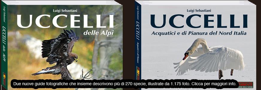 Uccelli delle Alpi - Uccelli acquatici e di pianura del Nord Italia